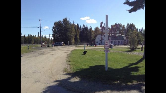 Fairbanks Holiday_Ursa