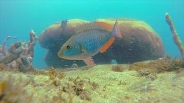 The Sea Turd